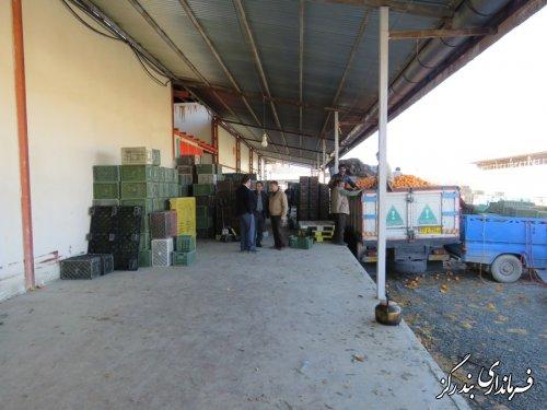بازدید بخشدار از مرکز خرید پرتقال درجه 3 باغداران در نوکنده