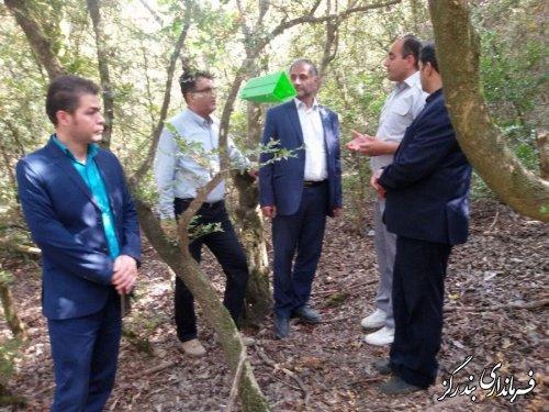 بازدید فرماندار بندرگز از عرصه های طبیعی و جنگلی بخش نوکنده در غرب استان