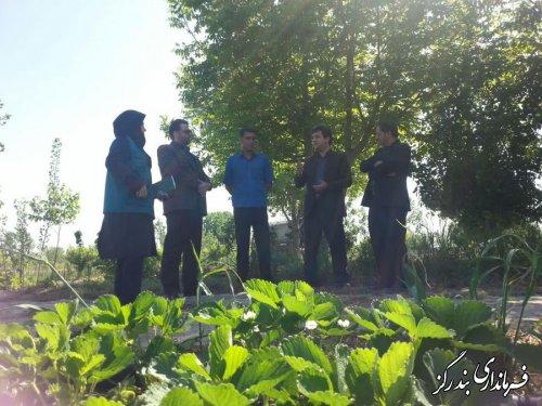بازدید فرماندار بندرگز از برداشت توت فرنگی در مزارع شهرستان