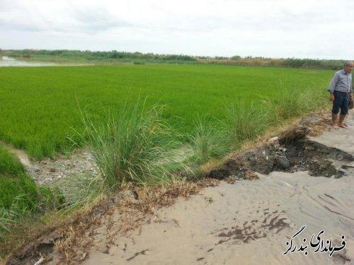 سیل به ۲۵۰ هکتار از اراضی کشاورزی بندرگز خسارت زد