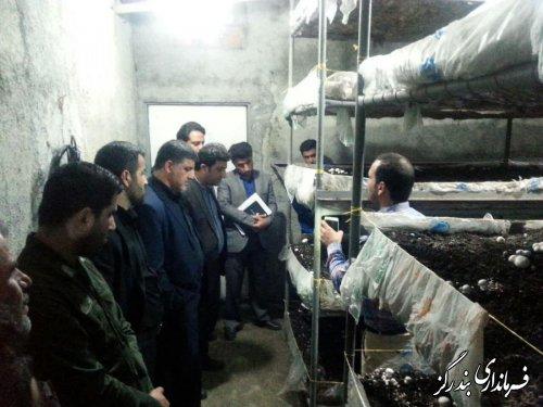 بازدید فرماندار بندرگز از کارگاه تولید قارچ در روستای کوه صحرا