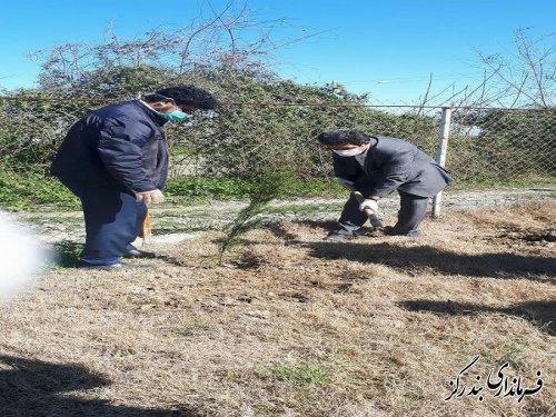 آیین درختکاری در بندرگز