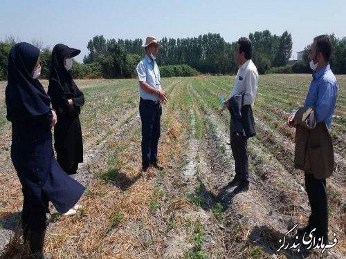 بندرگز از قطبهای تولید محصولات کشاورزی در گلستان است